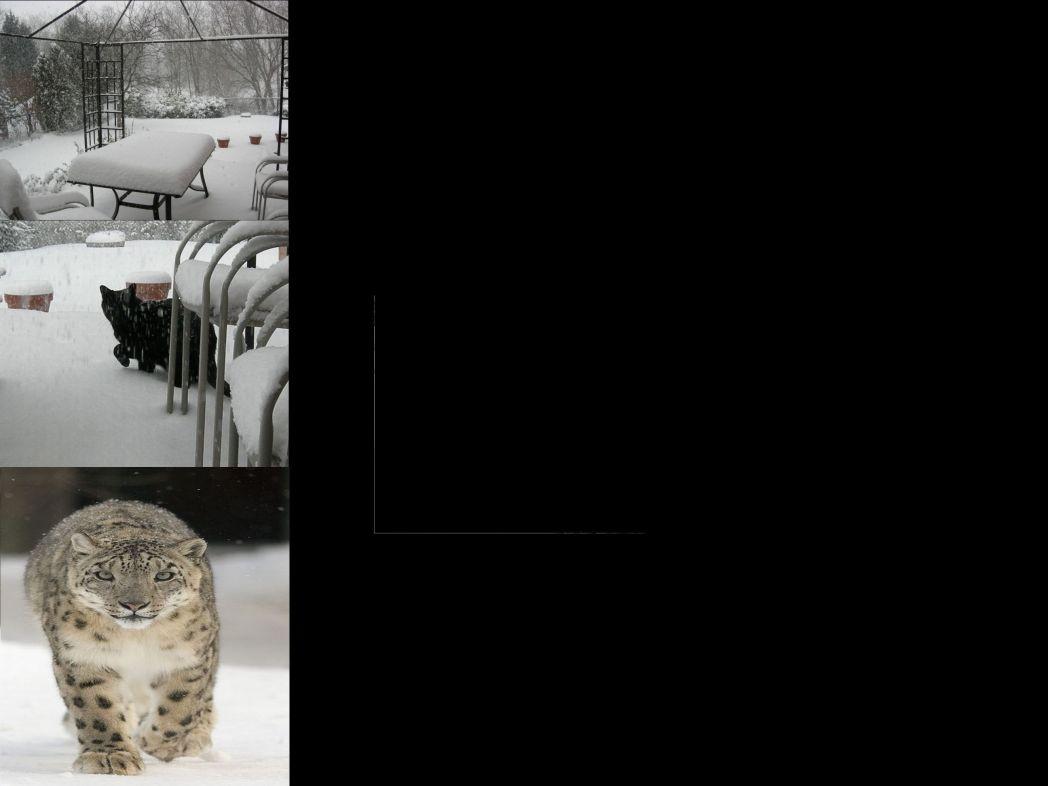 wintersnowl.jpg