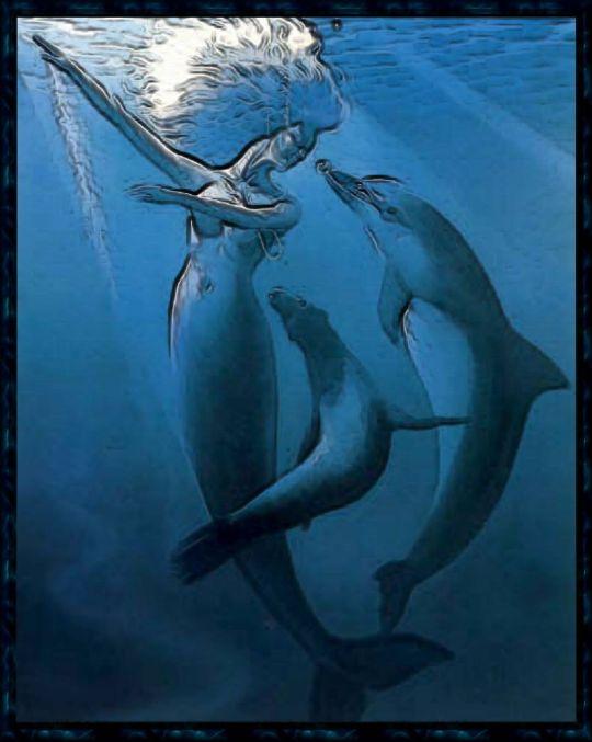 mermaidsanddolphins.jpg