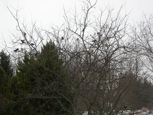 birds-010.jpg