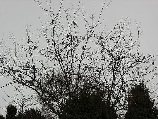 birds-028.jpg