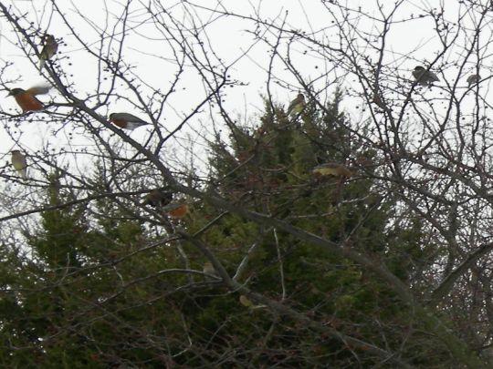 birds-032.jpg